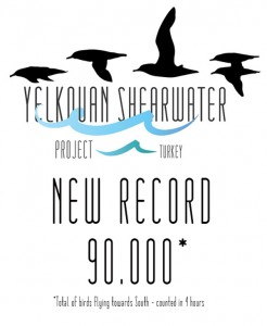 New Yelkouan Shearwater Record